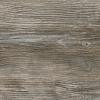R55004 RT Ponderosa Pine